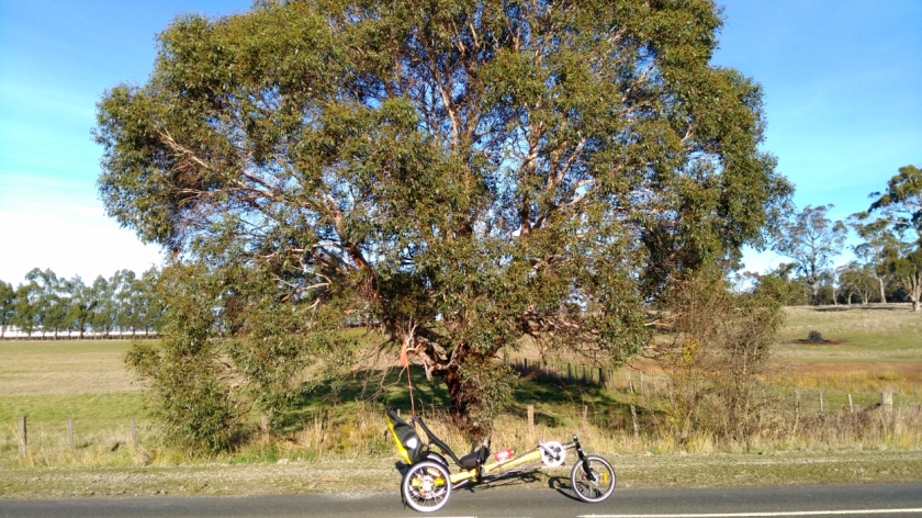 June Tree #1